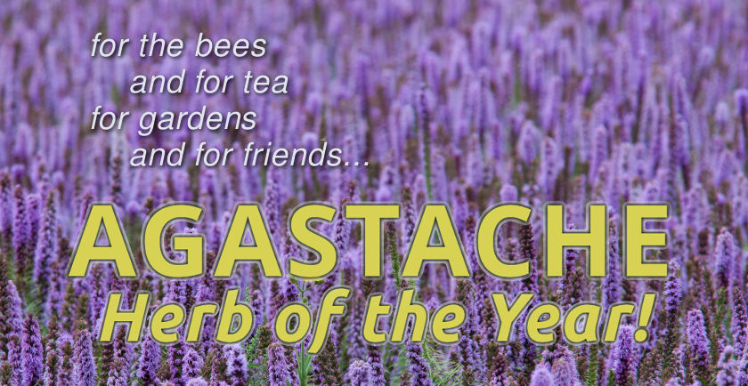 Richters Agastache 2019 Herb of the Year