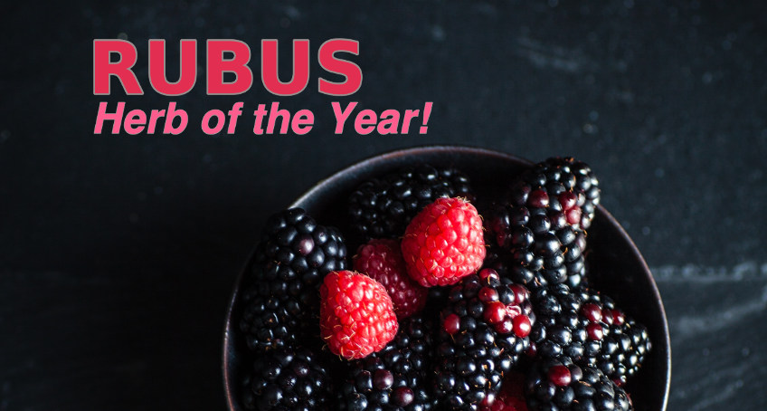 Rubus Herb of the Year