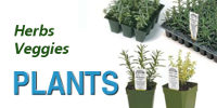 Richters Herb and Vegetable Plants
