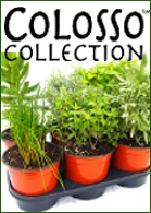 Colosso Collection Herbs