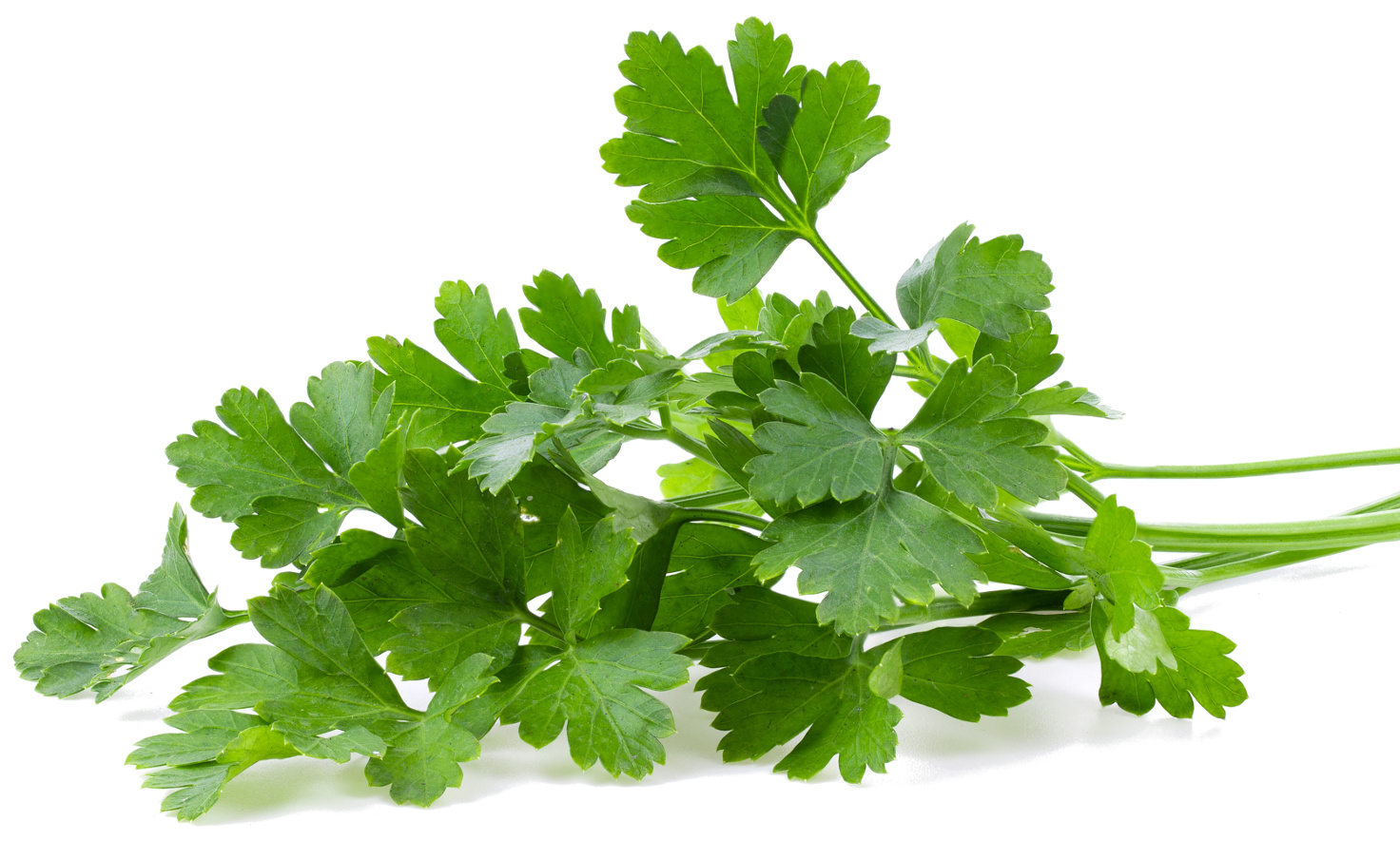Parsley Herb of the Year