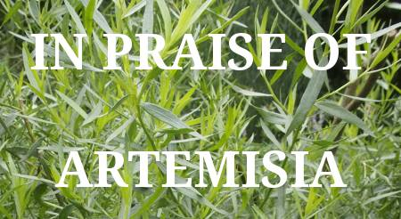 In Praise of Artemisia