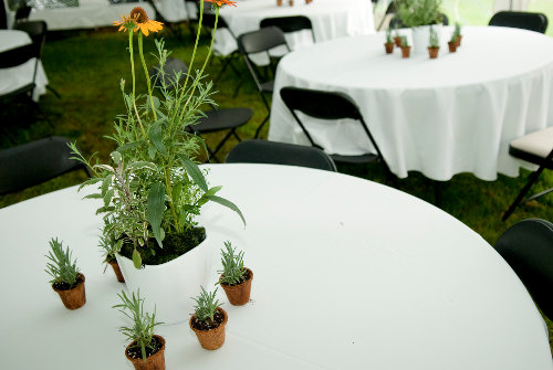Herbal Centrepieces
